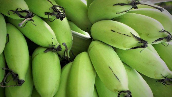 makanan-olahan-pisang
