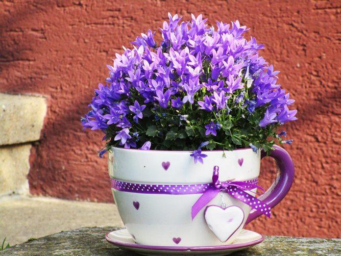 tanaman-hias-bunga-dalam-pot