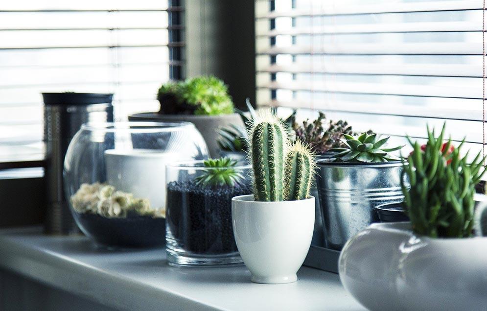 tanaman-hias-kaktus-dalam-pot