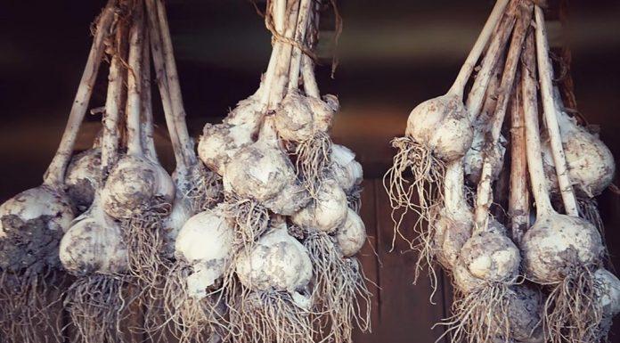 mengenl bawang putih